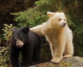 В США медвежата забрались в автомобиль и навели в нем