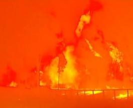 Лесные пожары в Австралии распространились на два штата уничтожая все на своем пути