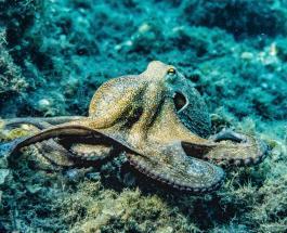 Люди убедили маленького осьминога покинуть пластиковый стаканчик в котором он жил
