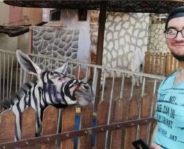 Студент разоблачил дирекцию каирского зоопарка выдававшую за зебру раскрашенного осла