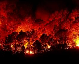 Пожары в Калифорнии: пламя подбирается к знаменитой президентской библиотеке Рейгана