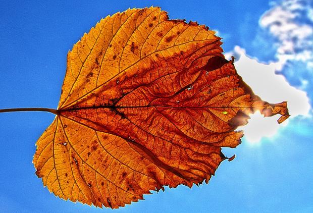 Гисметео Украина: погода на 21 октября – благоприятный день для прогулок