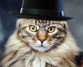 Найди кота: 2 занимательные головоломки для тренировки зрения и внимательности