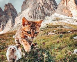 Приключения ежа и бенгальской кошки стали настоящим хитом в Сети: яркие фото друзей