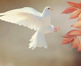 Международный день толерантности: особый праздник в поддержку особенностей человека
