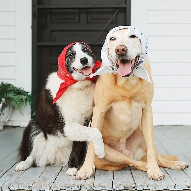 Очень прикольные картинки с собаками