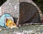 У каждого своя палатка