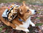 Эрико умеет носить рюкзак