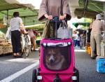 Эрико абсолютно спокоен в мини-транспорте