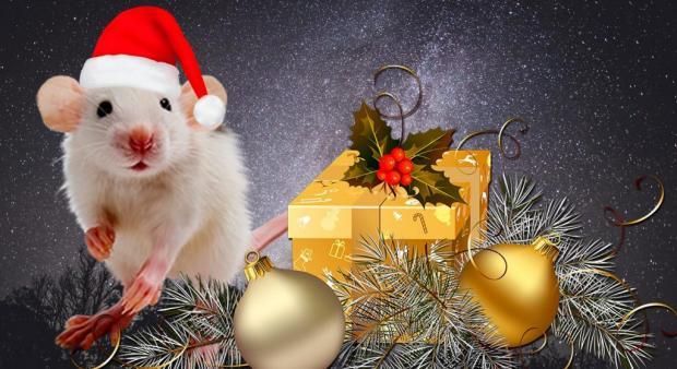папке фото картинки с наступающим новым годом с мышкой отлично сочетается папоротниками