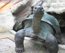 Гигантская черепаха Бигги стала рекордсменом зоопарка в Англии, прожив в нем 44 года
