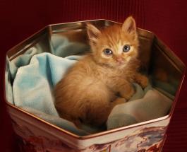 Зачем кошки прячутся в коробки: любопытные результаты исследования ученых