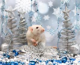 Китайский гороскоп 2020: какие сюрпризы принесет год Крысы в зависимости от года рождения