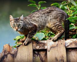 Новое смешное видео про животных: кот набрался смелости и прошел по алюминиевой фольге