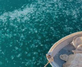 Нашествие медуз в Крыму – завораживающие фотографии необычного для зимы явления