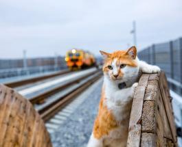Самый знаменитый в России кот встретил пассажиров поезда, проехавшего через Крымский мост