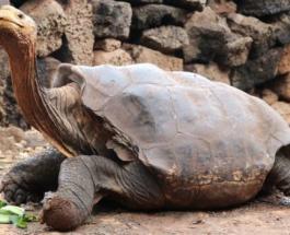 Любвеобильная 100-летняя черепаха Диего возвращается из заповедника в дикую природу
