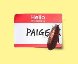 День Святого Валентина: в Британии можно назвать таракана именем своего бывшего возлюбленного