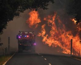 Гибель 500 млн животных и 7 млн Га леса: страшные последствия пожаров в Австралии в цифрах