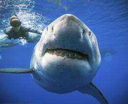 Смертельный дайвинг: в Австралии акула напала на экстремала