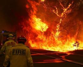 Пожары в Австралии: звёзды жертвуют средства для страны