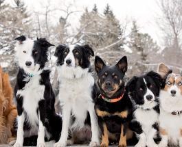 Тест на определение ментального возраста: сколько собак вы видите на картинке
