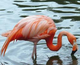 Удивительный случай в Сибири: история о заблудившемся фламинго по имени Вася
