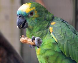 Крики попугая о помощи вызвали переполох за которым последовал вызов полиции