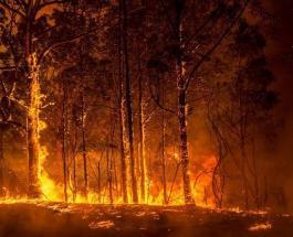 Потрясающие фото возрождающейся природы на сгоревшей территории Австралии