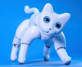 Кот-робот поддающийся воспитанию был представлен китайской компанией