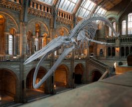 Самые интересные музеи Европы по отзывам и впечатлениям путешественников