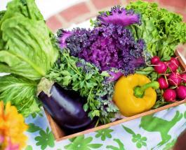 Ферма впервые в мире вырастила овощи без почвы с применением питательного корневого спрея