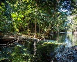 Человек выжил в кишащем крокодилами тропическом лесу проведя 3 недели в скитаниях