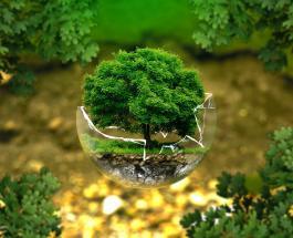 Тест по биологии: насколько хорошо вы эрудированы в вопросах флоры и фауны