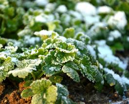 Календарь садовода-огородника на февраль 2020: подходящие дни для работы с растениями