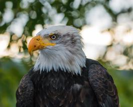 ДТП с участием белоголового орлана на одной из трасс в США попало на видео