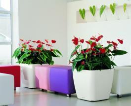 Как спасти комнатные растения от пересыхания и перелива: 2 эффективных трюка