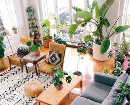 Лунный календарь на февраль 2020: благоприятные дни для ухода за комнатными растениями