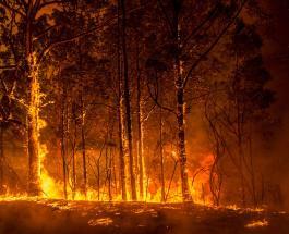 Власти Австралии выделят 1,4 миллиарда долларов на восстановление страны после пожаров