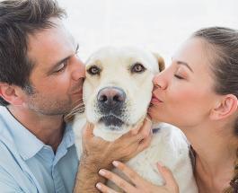 10 мифов об уходе за домашними животными, в которые пора перестать верить