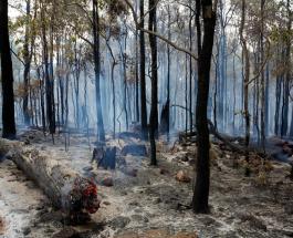 Опасные пауки активизировались в Австралии из-за жары и высокой влажности воздуха