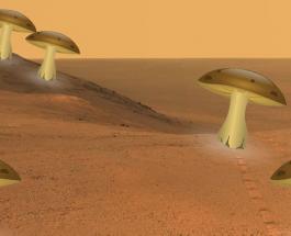 """НАСА хочет выращивать """"живые"""" дома из грибов на Луне и Марсе"""