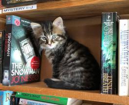 Уникальная библиотека в Канаде: жители книжного магазина никого не оставляют равнодушными