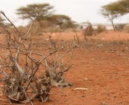 В Южной Африке голодают 45 миллионов человек - ООН