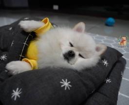 Уникальный детский сад для собак открылся в Южной Корее