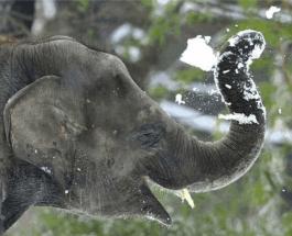 Слоны в снегу: перед жителями Екатеринбурга открылось необычное зрелище