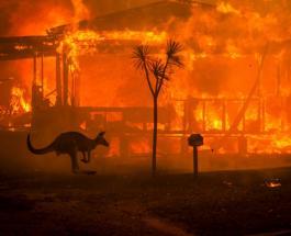 Бушующие в Австралии пожары унесли жизни полумиллиарда животных