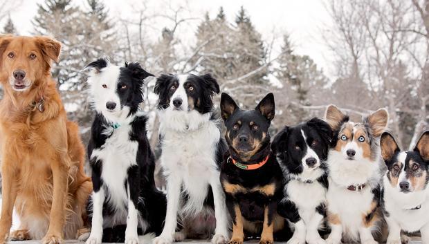 Сколько собак на картинке
