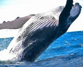Праздники 15 февраля: Всемирный день китов как призыв человечества к действиям
