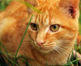 Праздники 1 марта: День кошек и наступление долгожданной весны